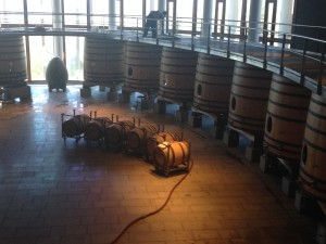 The vineyard tour and their huge barrels