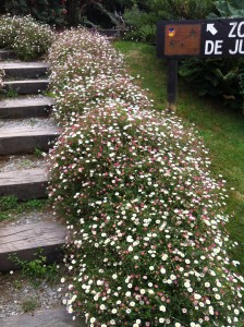 flowers lining the stairs