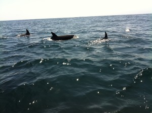 Dolphins- there were hundreds of them!